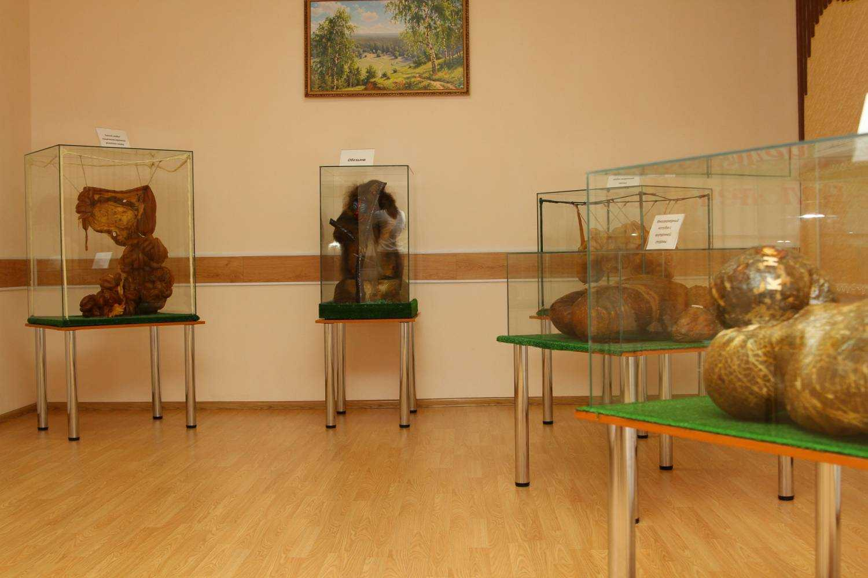 Экспонаты в анатомическом музее