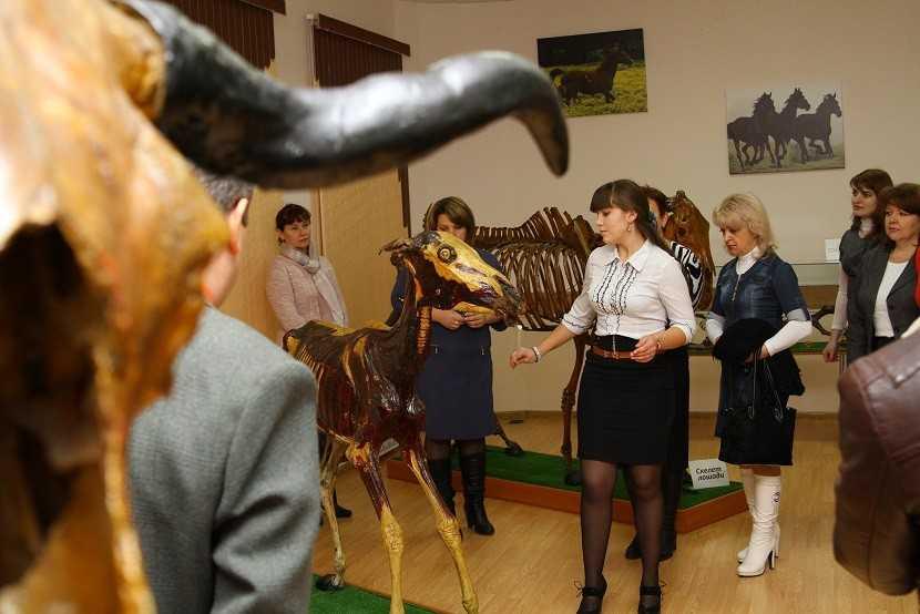Демонстрация экспонатов в анатомическом музее.